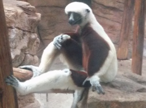 Lemurs are just hilarious to watch.  They were behind glass, so I didn't get the clearest pic, but he just looks SO relaxed!