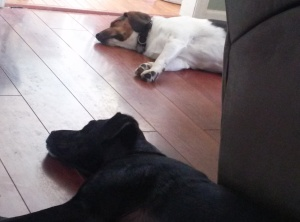 After a walk on a hot day, we get a little peace and quiet from two tired pups.