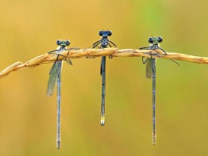 Check out more macro photos like this one at http://urdu-mag.com/blog/2012/05/25-beautiful-macro-photography/
